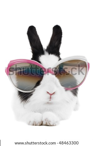 rabbit in Sunglasses isolated - stock photo