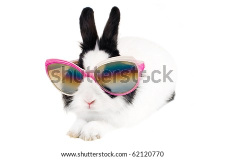 rabbit in Sunglasses isolated