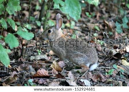 rabbit in the forest - stock photo