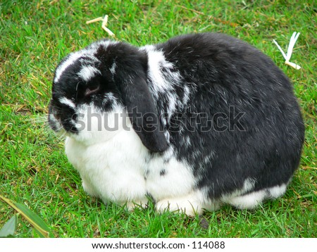 Rabbit in the grass - stock photo