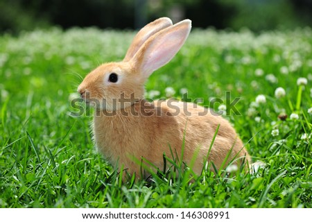 rabbit in the nature  - stock photo