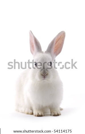 rabbit isolated - stock photo