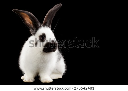Rabbit isolated on black background - stock photo