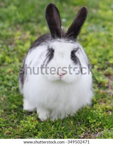 Rabbit looking at camera - stock photo