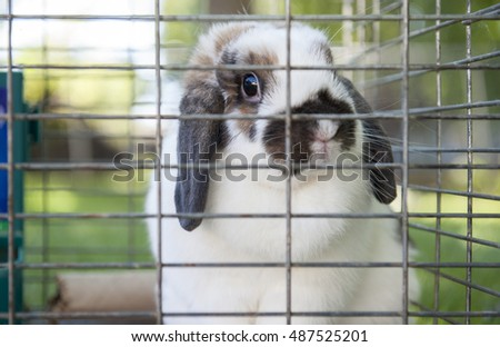 Rabbit looks out of its wired cage