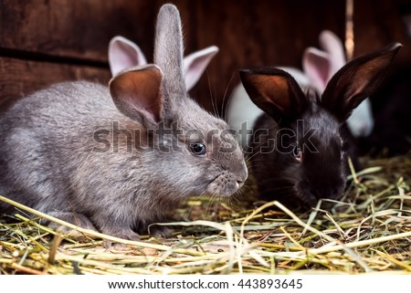 Rabbit. Mammal animal in the farm. Fluffy bunny with cute ear and fur. Small brown, black or gray young sweet domestic pet. Furry rodent. Adorable crearute. - stock photo