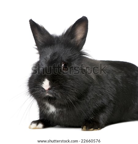 Rabbit (7 months) in front of a white background