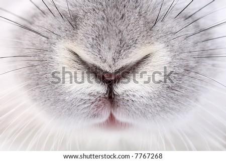 rabbit mouth and nose, abstract macro shot - stock photo