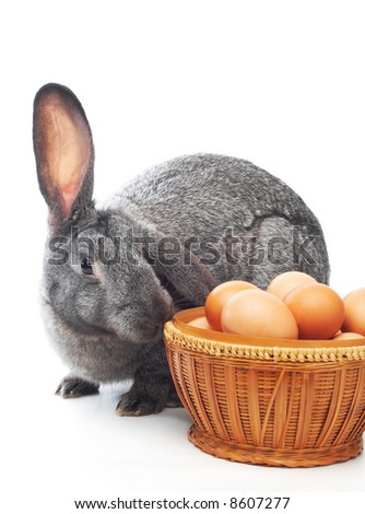 rabbit near to basket with eggs isolated on white