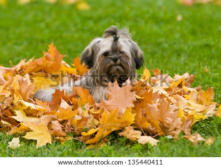 Rabbit on a walk in the park - stock photo