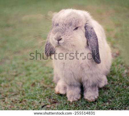 Rabbit on grass - stock photo