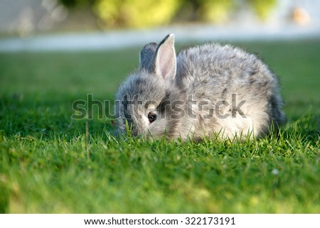 Rabbit on grass, focus pointed at the eye of rabbit and shallow DOF - stock photo