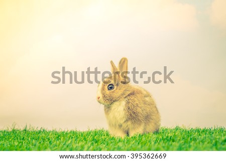 Rabbit on green grass for easter holiday ( Filtered image processed vintage effect. ) - stock photo