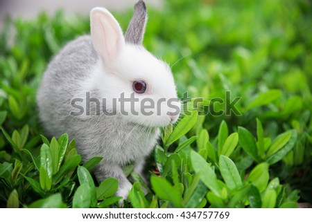 Rabbit on green leaf