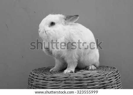 rabbit on the basket (black and white photo)