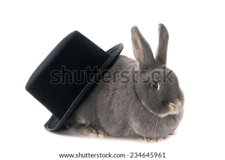 Rabbit out of the hat, isolated on white - stock photo