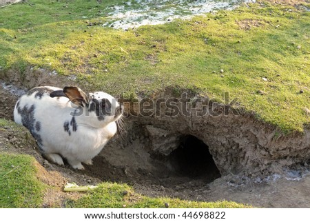 Rabbit resting by it's hole - stock photo