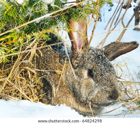 rabbit sit under bush on snow