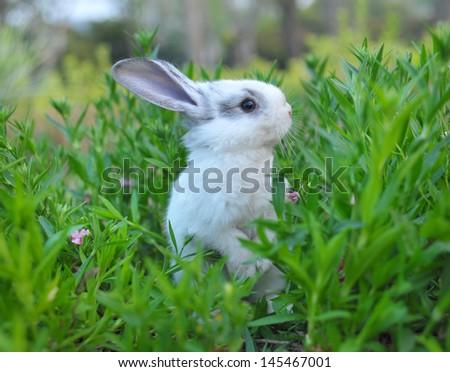 rabbit standing in green grass - stock photo