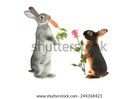 rabbit with a rose flower another with carrot - stock photo