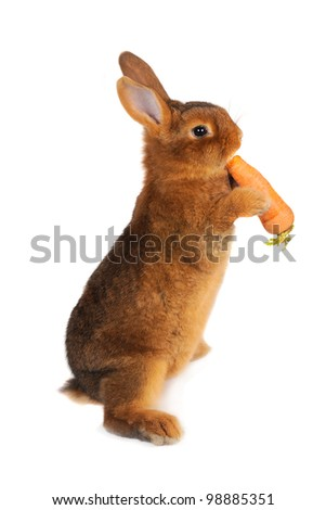 Rabbit with carrot in paws ���®n a white background - stock photo