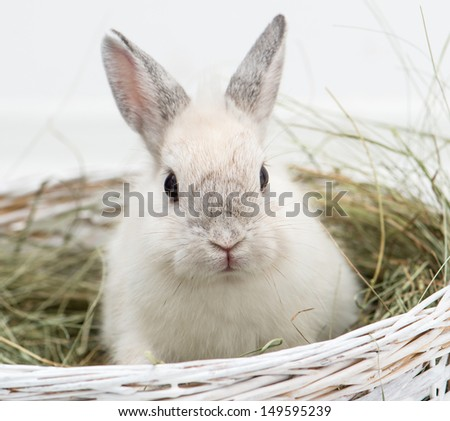 rabbit with carrot in studio - stock photo