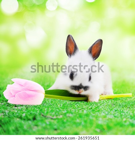 rabbit with flower - stock photo