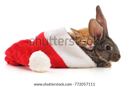 Rabbit with kitten in a Christmas hat isolated on white background.