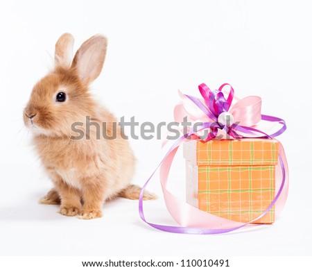 Rabbit with red giftbox - stock photo