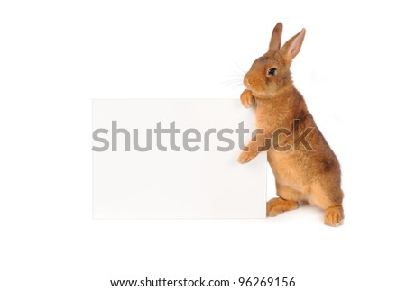Rabbit with sheet for a text writing - stock photo
