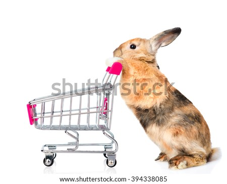 Rabbit with shopping trolley. isolated on white background