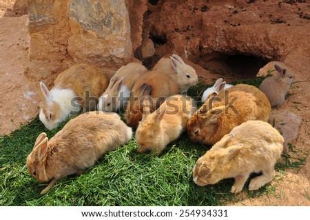 Rabbits feeding on grass and rabbit hole. Farm animals. - stock photo