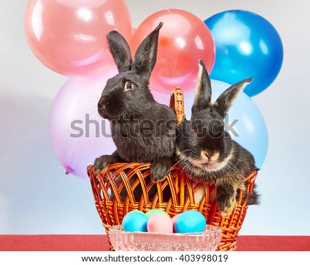 Rabbits in front of colorful balloons and a vase with Easter eggs