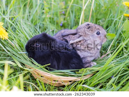 Rabbits  in grass - stock photo