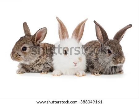 Rabbits isolated on a white background. Easter concept - stock photo