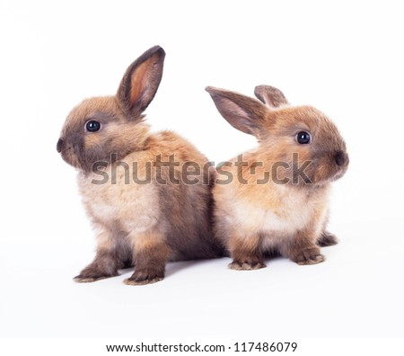 Rabbits on a white background.Animal collection.
