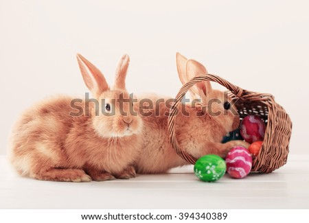 rabbits with Easter eggs on white background