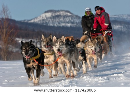 Race on a dog team in Russia on the peninsula of Kamchatka - stock photo