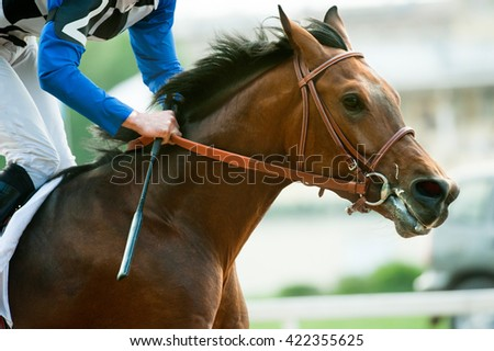 racing horse portrait in action - stock photo