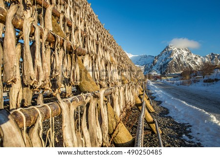 Racks full of dried codfish, Svolvaer, Lofoten, Norway