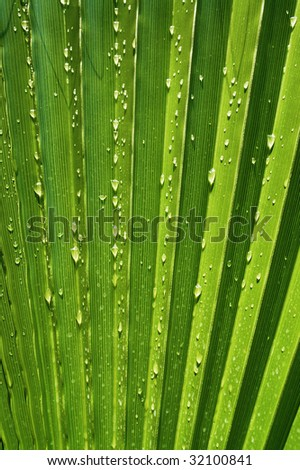 Radiant pattern of green palm leaf