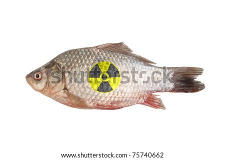 Radioactive crucian isolated on white background - stock photo