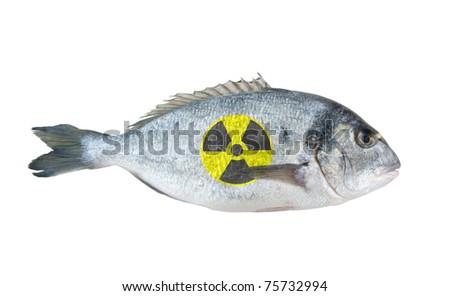 Radioactive dorado fish isolated on white background - stock photo