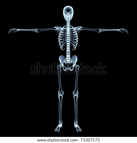 radiological image of the human skeleton - black background