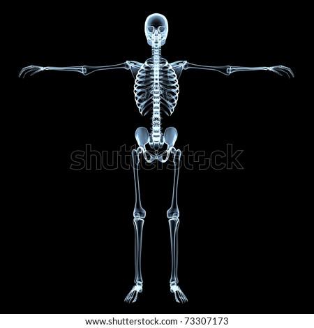 radiological image of the human skeleton - black background - stock photo