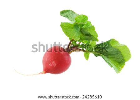 Radish isolated on white - stock photo