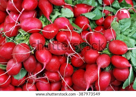 Radish. Red radish, Radish on market. Radish background. Radish vegetables.  - stock photo