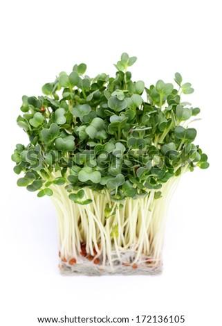 Radish sprout, isolated on white background  - stock photo