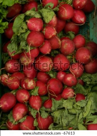 Radishes - stock photo