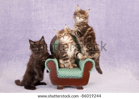 Rag doll kittens on green chair on lilac background - stock photo